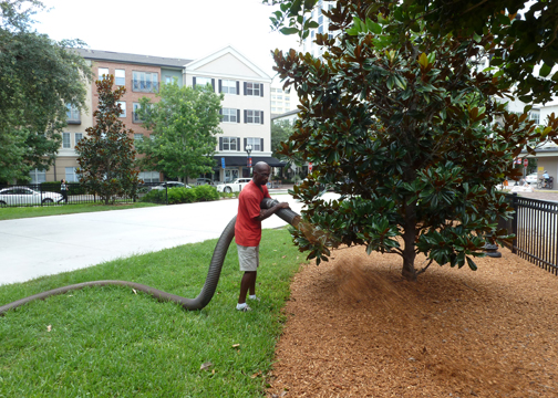 Mulch Blowing Orlando - Major Mulch Installations